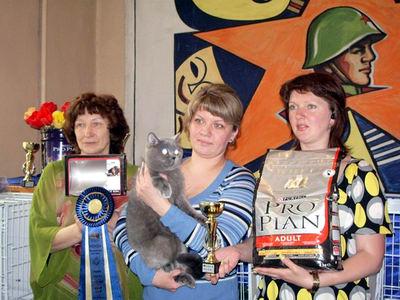 Выставка кошек в Уссурийске