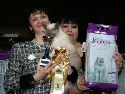 Выставка кошек в Нижнем Новгороде
